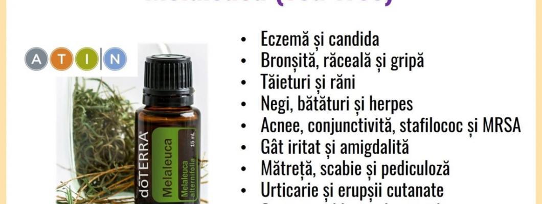 15 beneficii ale uleiului esential melaleuca-arborele de ceai de la Doterra