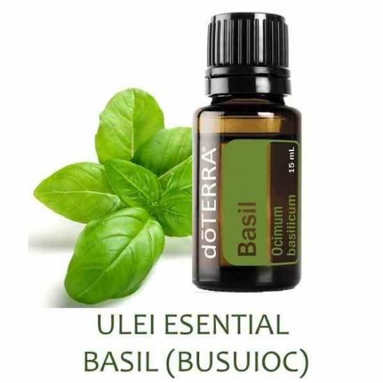 Busuioc (basil) Ocimum basilicum