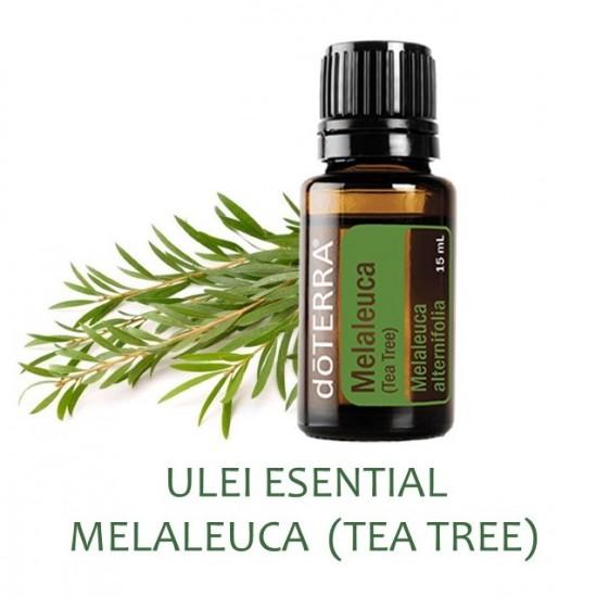 Melaleuca (Arbore de ceai) -15 ml